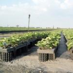 vasi da coltivazione